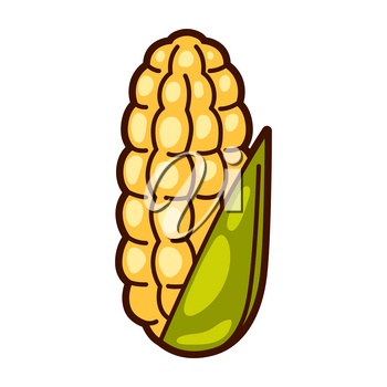 Illustration of fresh ripe corn. Autumn harvest of vegetables. Food item for farms, markets and shops. Icon or promotional image.