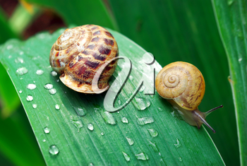 Family of snail on leaf. Nature composition.