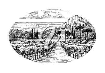Countryside scenery. Vineyard by the sea. Hand drawn rural landscape. Vintage style vector illustration.