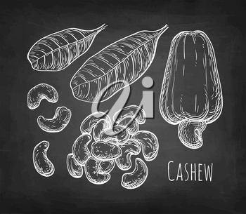 Cashew set. Chalk sketch of nuts on blackboard background. Hand drawn vector illustration. Retro style.