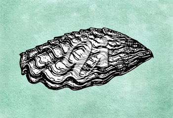 Oyster shell. Ink sketch on old paper background. Hand drawn vector illustration. Retro style.
