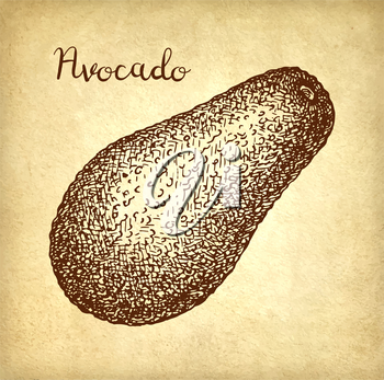 Ink sketch of avocado on old paper background. Hand drawn vector illustration. Retro style.