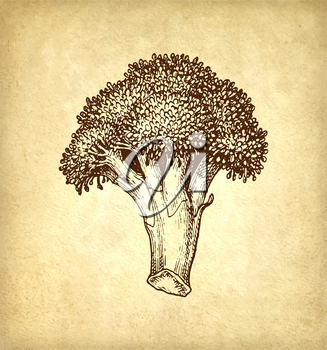 Ink sketch of broccoli on old paper background. Hand drawn vector illustration. Retro style.