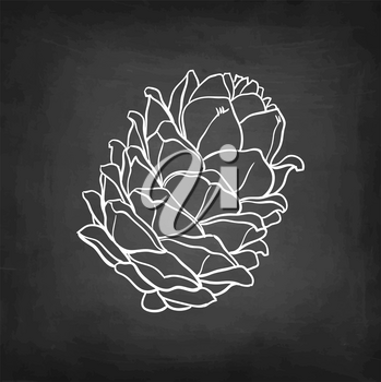 Chalk sketch of pine nut on blackboard background. Hand drawn vector illustration. Retro style.