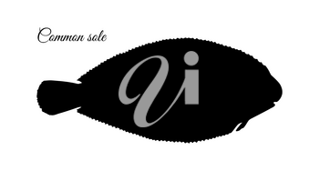 Common sole. Ink sketch of flatfish. Hand drawn vector illustration isolated on white background. Retro style.