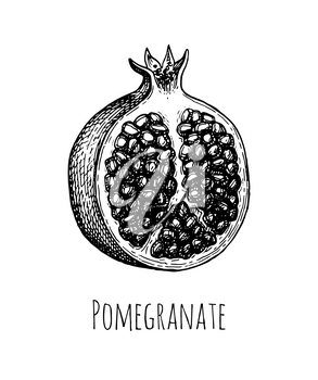 Pomegranate split open. Ink sketch isolated on white background. Hand drawn vector illustration. Retro style.