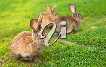 Rabbits on grass. Animal composition