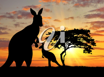 Silhouette of a kangaroo with a baby on a background of a beautiful sunset