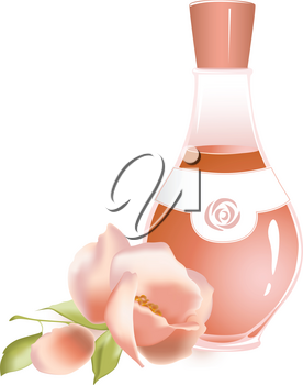 rose oil and flower of rose on a white background