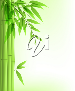 Vector background with green bamboo