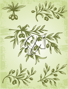 Vector vintage hand drawn olive branch