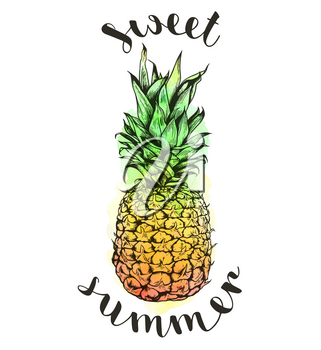 Hand drawn tropical vector pineapple and watercolor texture on a white background. Sweet summer lettering
