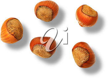 Royalty Free Photo of a Group of Acorns