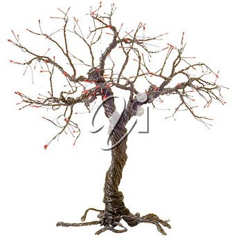 Royalty Free Photo of a Bonsai Tree