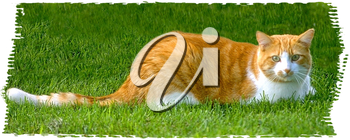 Royalty Free Photo of an Orange Tabby Cat Sitting in the Grass