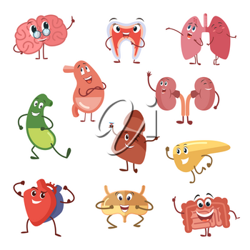 Human organs with funny emotions. Cartoon vector illustration isolate on white background, Cartoon character human organs, vital internal funny organ brain and kidney