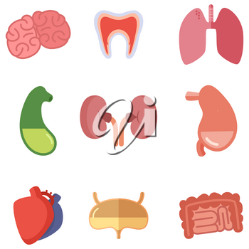 Human internal organs on white background. Vector icons set in cartoon style. Liver and heart, brain and digestive illustration