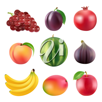 Realistic vector illustrations of various fruits. Grapes and figs, watermelon and mango