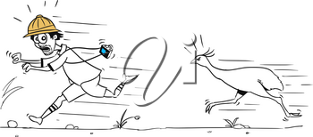 Cartoon vector male tourist is running away from large ostrich bird pursuing him