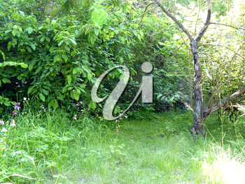 Secluded place nook in the old unmaintained garden with bushes, green grass and dead apple tree.
