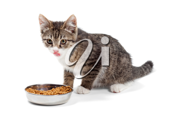 The striped kitten eats a dry feed, is isolated on a white background