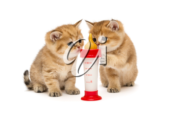 Two little red kitten and bottle of milk isolated on white
