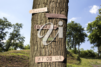 Tree in the woods with signs in Serbian language on it