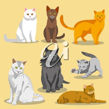 Cute vector cats with different colored fur and markings. Set of cats and illustration cat pet