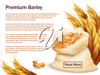 Realistic barley, ears and grains isolated on white background. Premium barley vector web background template. Illustration of wheat crop, harvest agriculture