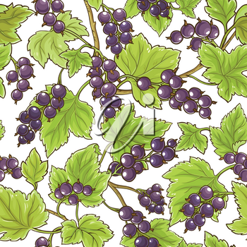 black currant vector pattern on white background