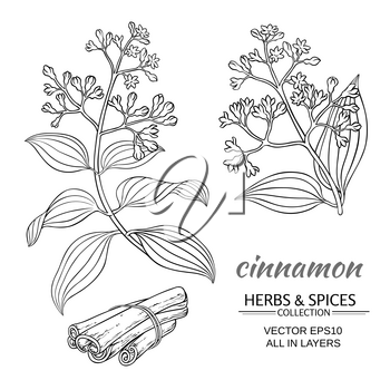 cinnamon vector branches set on white background