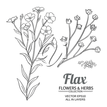 flax plant vector set on white background