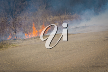 Burning dry grass in smoke and fire, early spring.