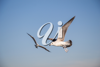 Seagulls flying in a sky as a background