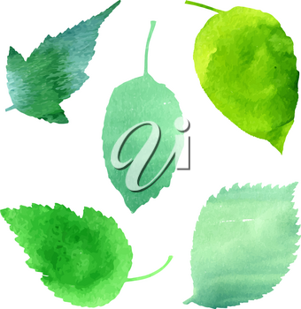 Vector set of green leaves, suitable for design patterns, background for badges and logo. Symbols of summer, growth, ecology