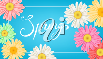 Spring banner. Hand drawn lettering. Background with chamomile, daisy
