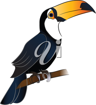 A toucan bird with bright orange beak is sitting on a branch vector color drawing or illustration
