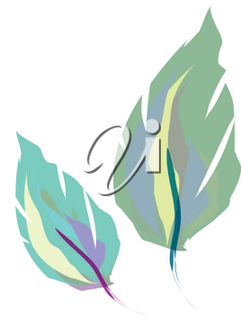Two beautiful feather print in shape of leaf vector color drawing or illustration