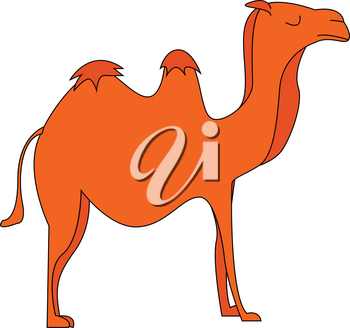 silhouette of a camel with its humps vector color drawing or illustration