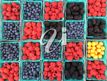 bright berries in boxes from overhead in square pattern