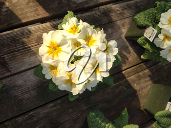 Flowers yellow white bright colors on rustic wood background